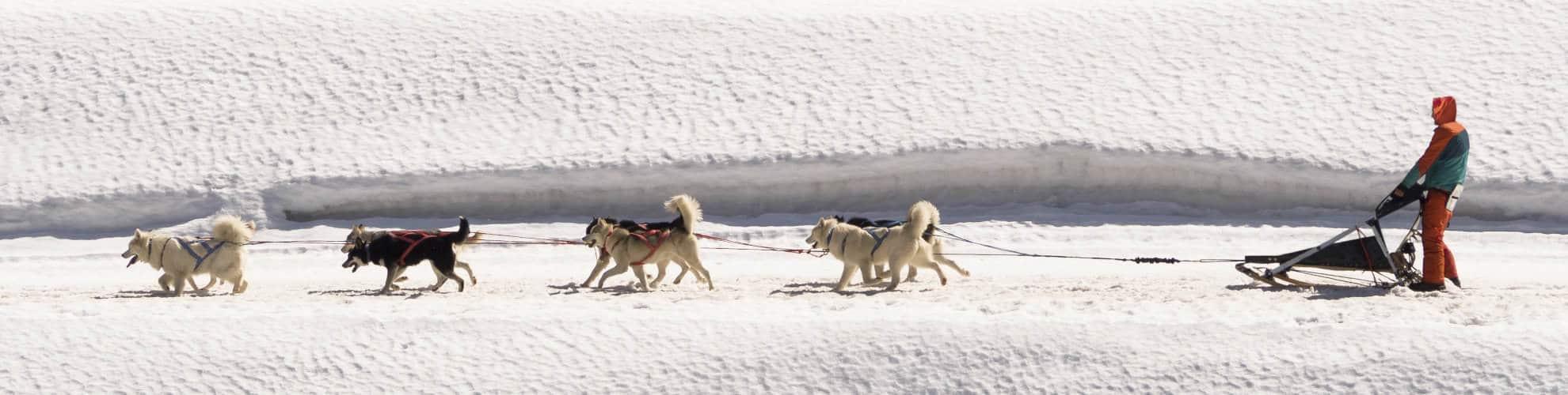 Residence hotel slitta trainata da cani