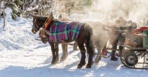 gita in carrozza sulla neve