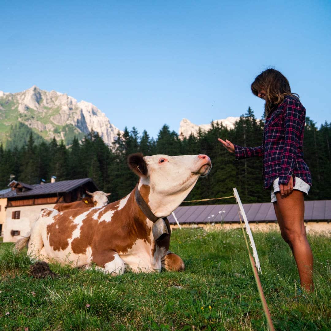 malga ragazza con mucca