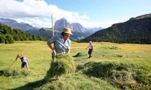 contadini malga dolomiti val gardena
